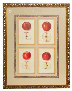 Framed Agriculture Pages - Apples 1