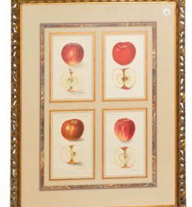 Framed Agriculture Pages - Apples