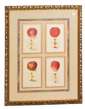 Framed Agriculture Pages - Apples