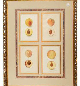 Framed Agriculture Pages - Peaches 1