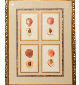 Framed Agriculture Pages - Peaches